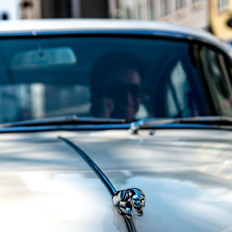 Jaguar - Processed